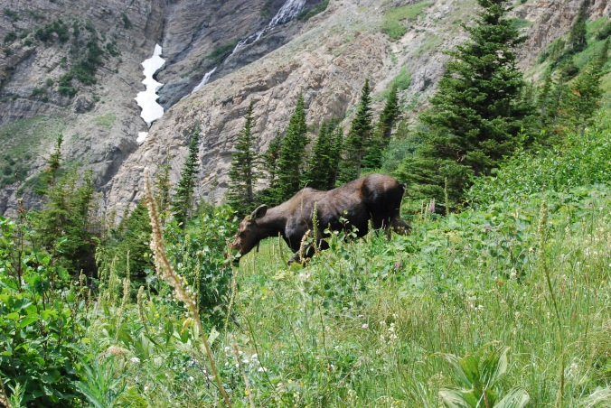 Moose Browsing on Mountain Slope